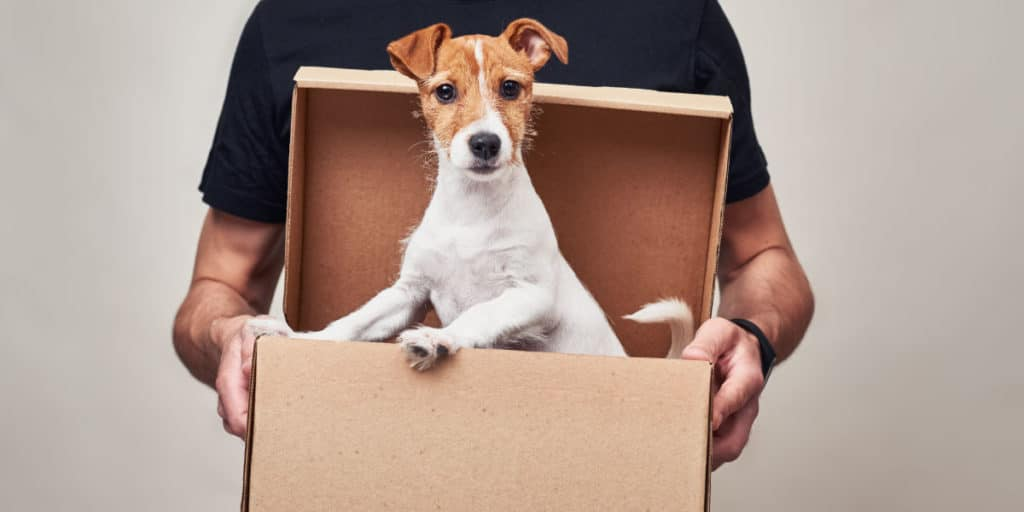 envio de mascotas